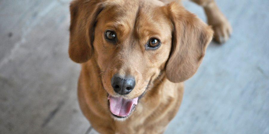 alimentation-chien-sterilise