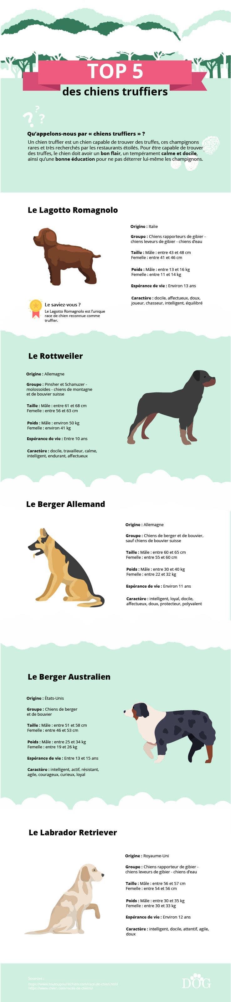 infographie sur le top 5 des chiens truffiers