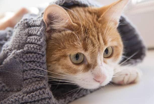 Avez-vous d'autres animaux chez vous (chat, rongeur…) ?