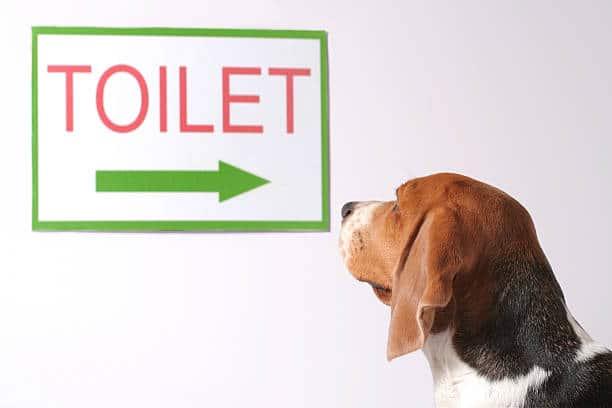 """Chien qui regarde un panneau de direction """"toilettes"""""""