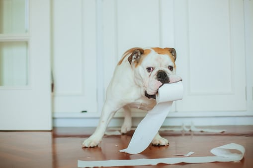 Chien qui a un rouleau de papier toilettes dans la bouche