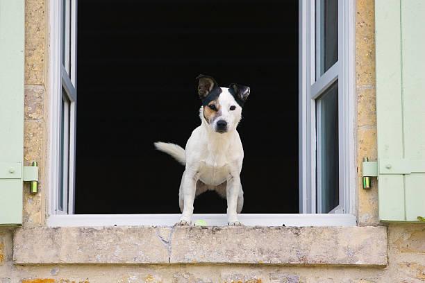 Est-ce que vous attendez de votre chien qu'il soit méfiant envers les inconnus, pour monter la garde par exemple ?