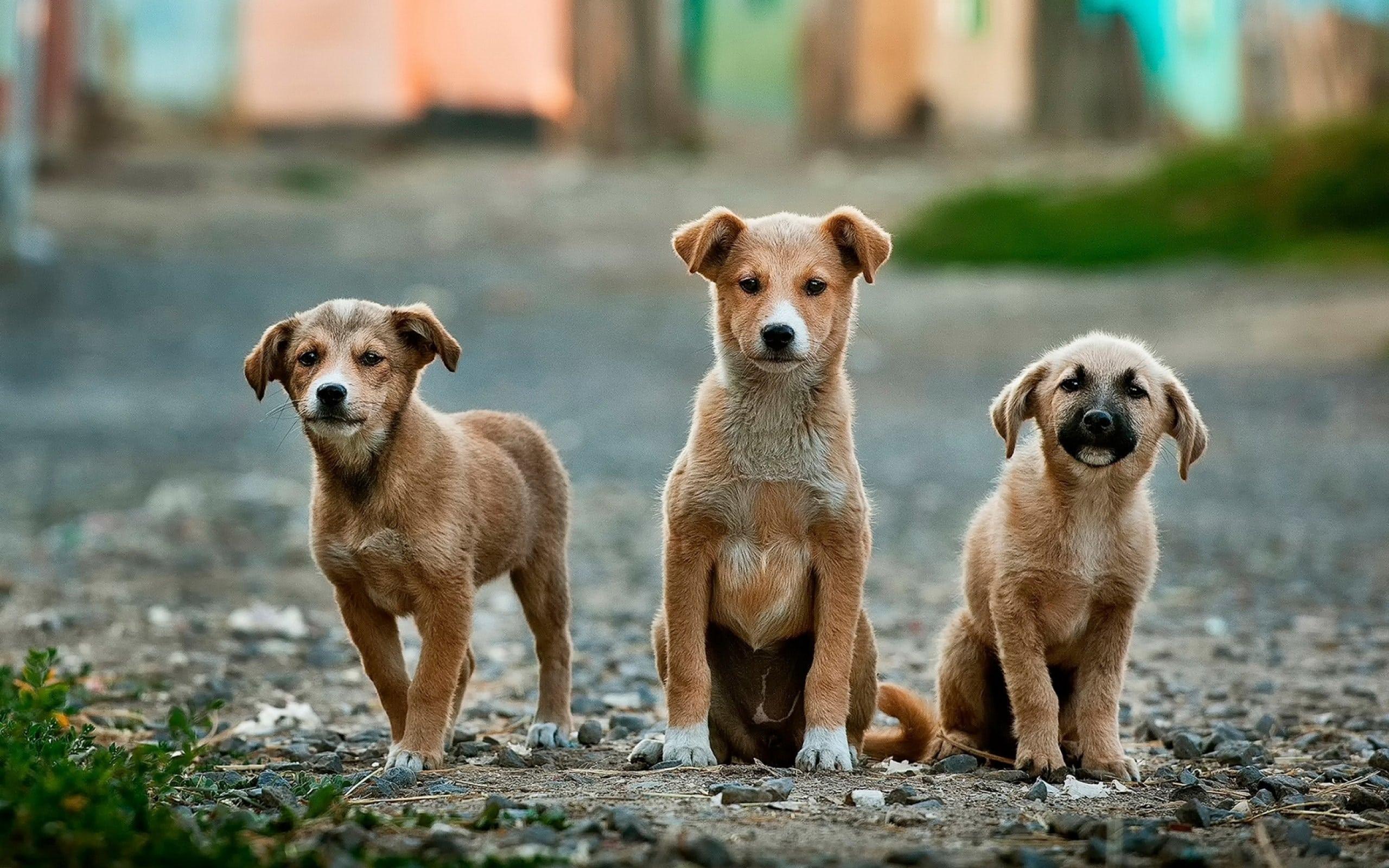 Avez-vous déjà éduqué un chien auparavant ?