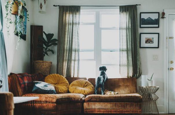 Chien qui regarde par la fenêtre d'un salon, debout sur le canapé