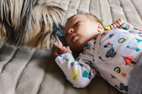 Un chien reniflant un bébé