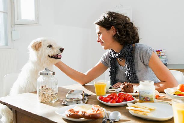 Femme en train de caresser son chien alors qu'il réclame de la nourriture à table