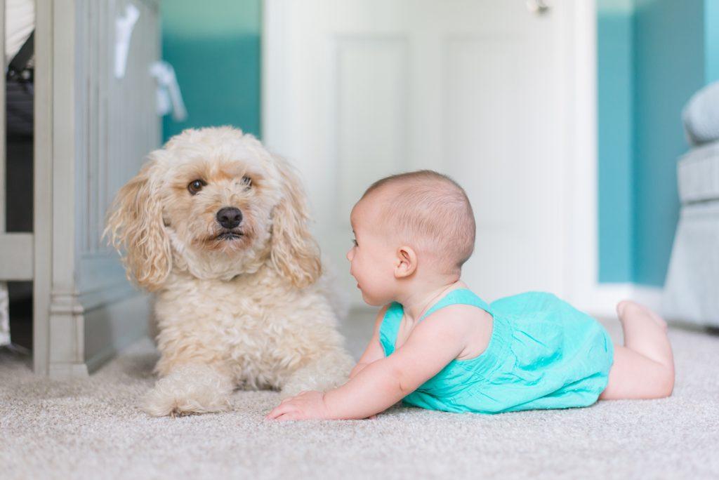 Un chien et un bébé se regardent
