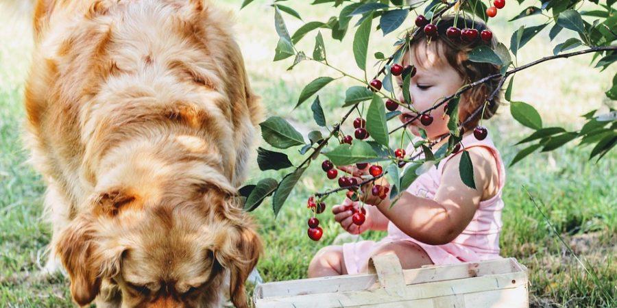 Petite fille en train de jouer avec un labrador dans le jardin