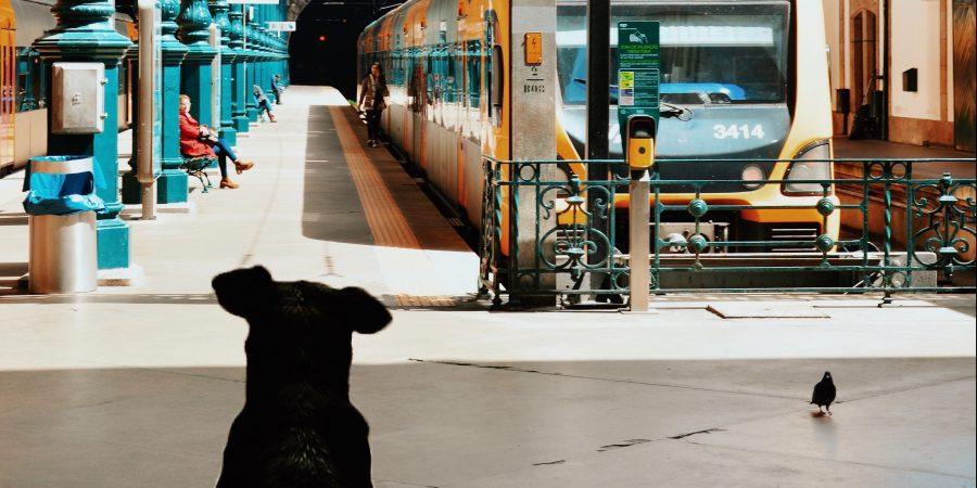 Chien de dos face à un train sur un quai de gare