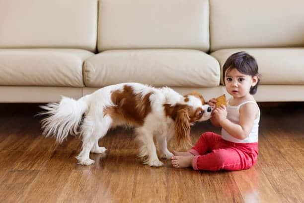 Petite fille en train de partager un biscuit avec son chien