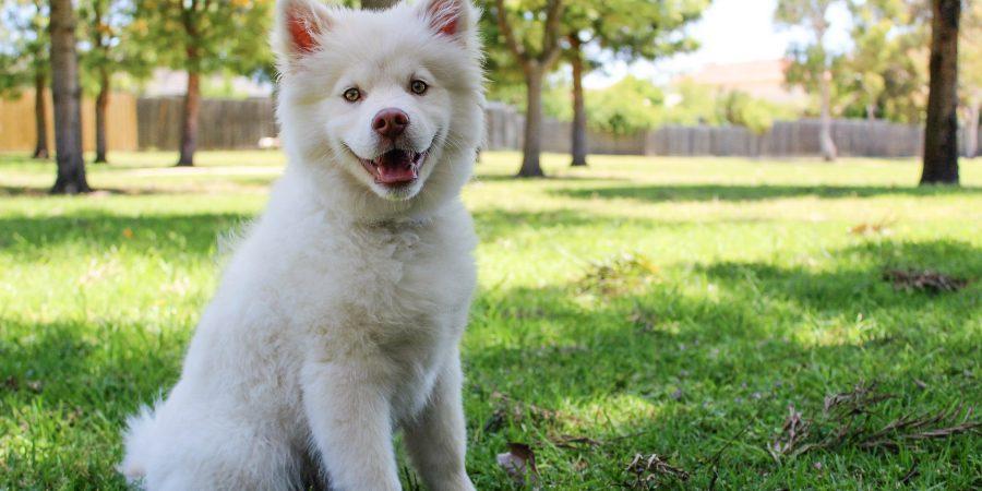 Jeune chien qui s'amuse dans le jardin de son maître