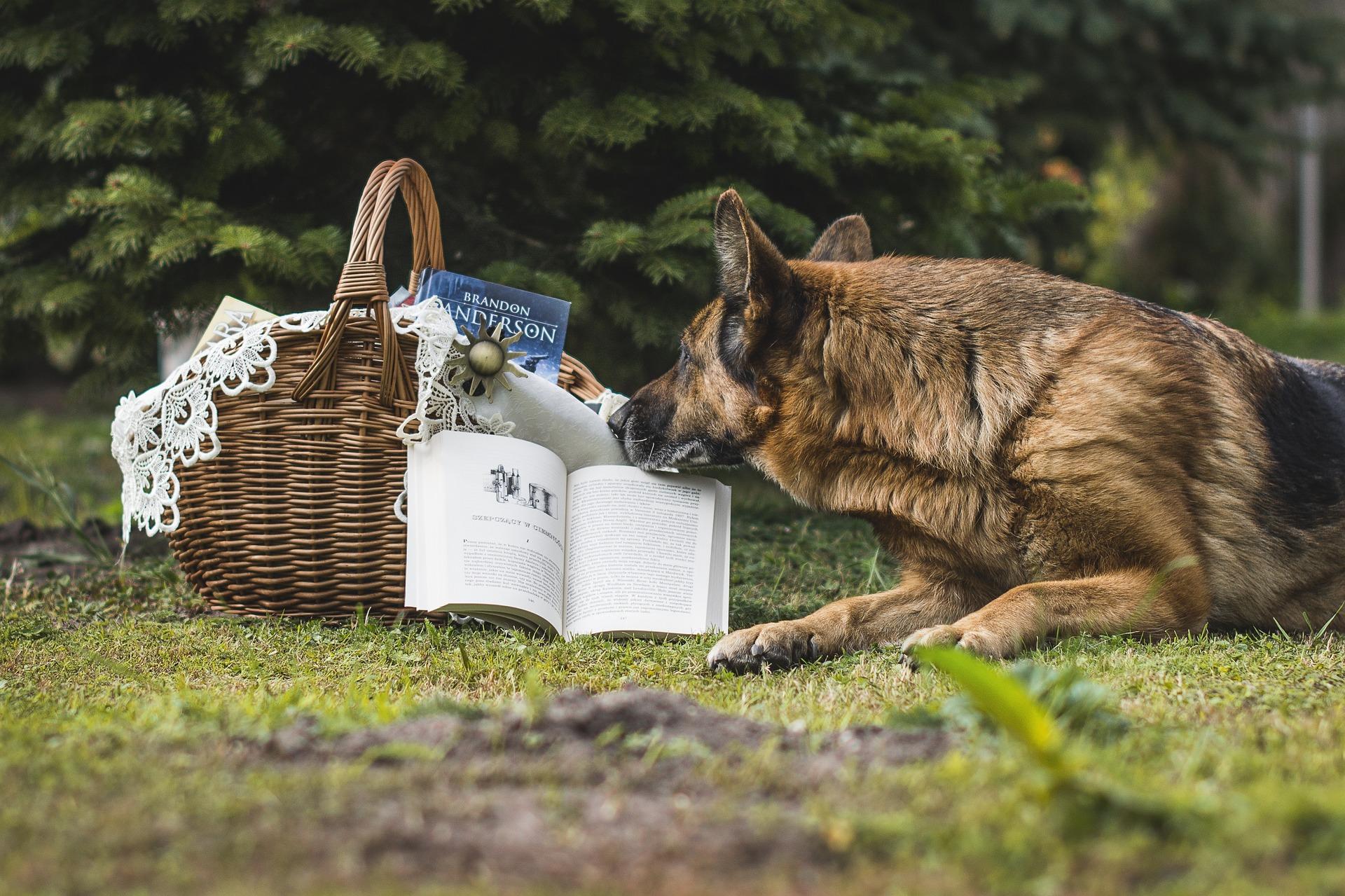 L'éducation canine :