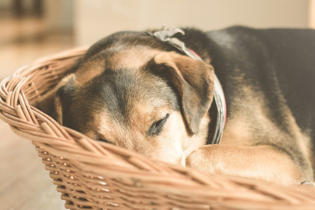 chien endormi dans son panier