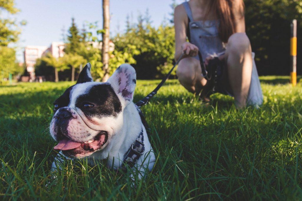 chien en laisse allongé dans l'herbe devant sa maîtresse