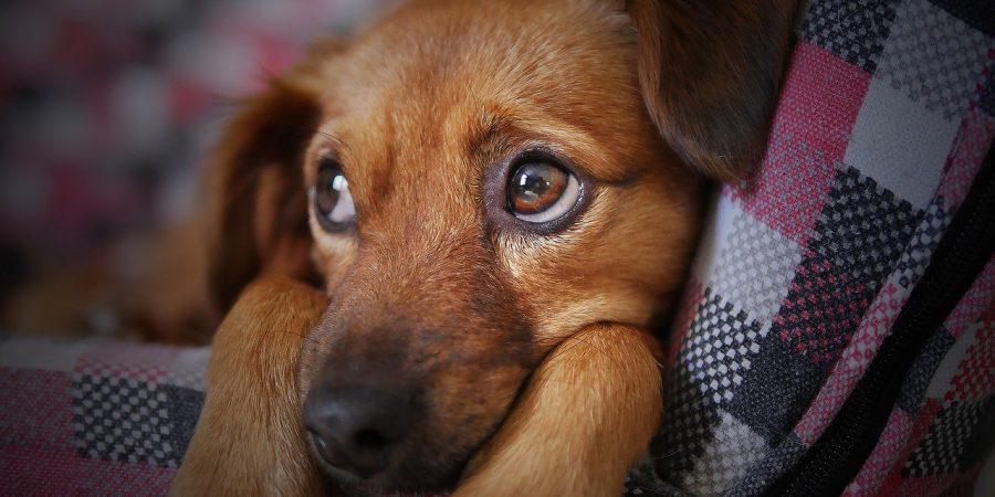 punir-un-chien